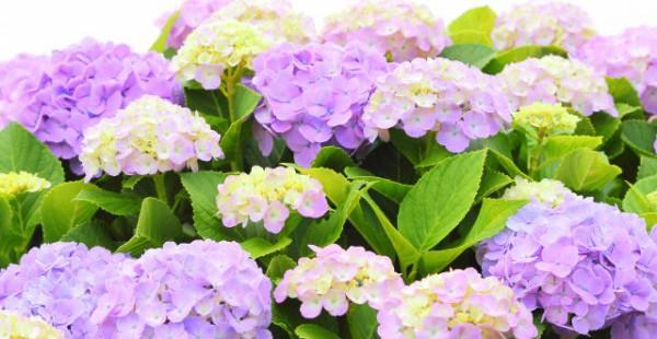 日本列島続々梅雨入り これからの季節は食べるものには気をつけましょうね!