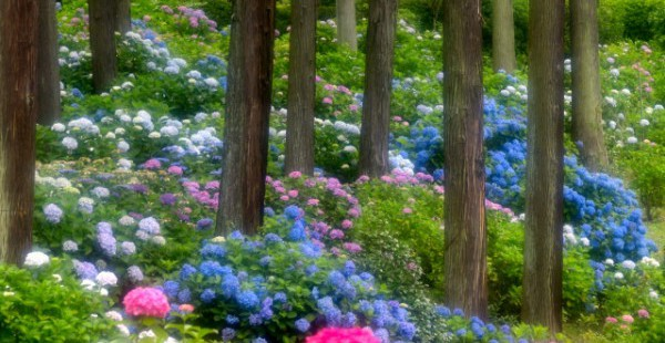 【梅雨対策】日本人だからこその知恵 二十四節気から季節を感じよう