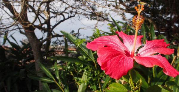 バニラエアに乗って沖縄に来ました。
