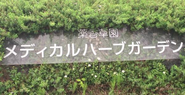 埼玉 生活の木 薬香草園 メディカルハーブガーデンに行ってきた。