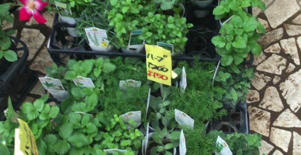 青山 花市場 オリジナルミニハーブガーデンをつくろう その1